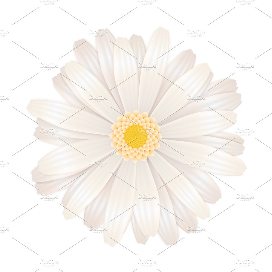 Bright White Gerbera Flower Graphic Objects Creative Market