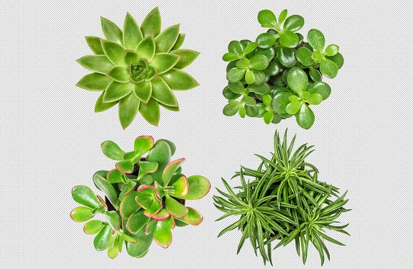 Succulent Plants Isolated PSD