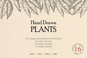 Hand drawn vector plants