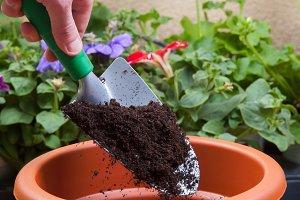 Preparing a pot for transplanting
