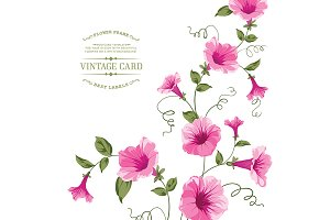 Bindweed flower for vintage card