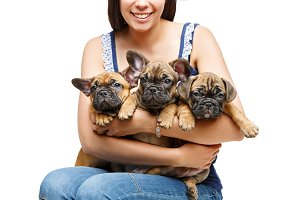 french bulldog puppies on girl knees
