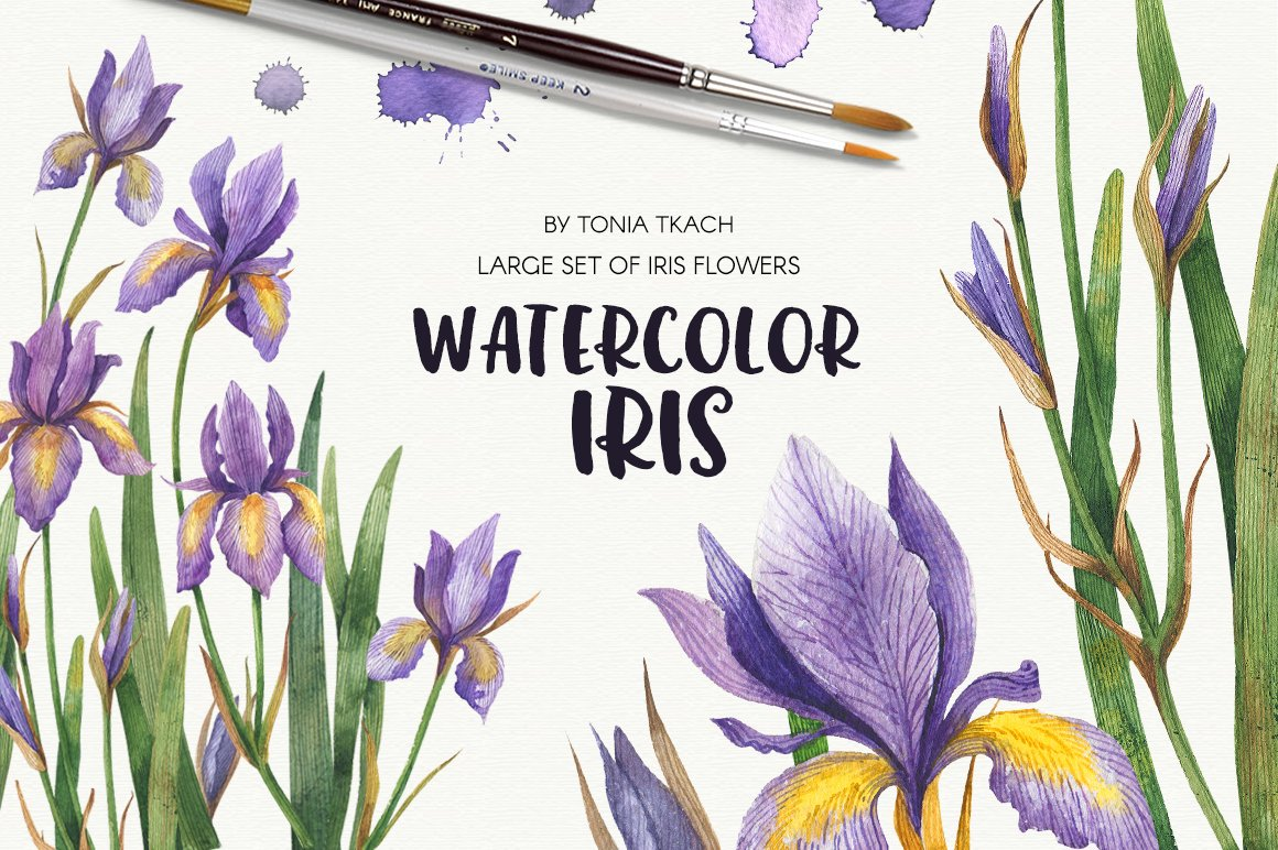 Watercolor iris illustrations creative market izmirmasajfo