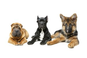 beautiful three puppy dogs