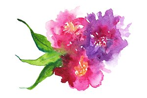 Watercolor floral composition art