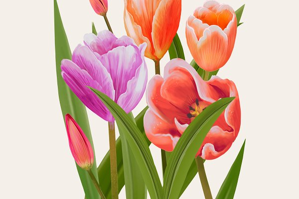 Illustration drawing Tulip flowers