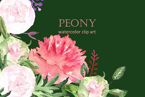 Peony watercolor collection