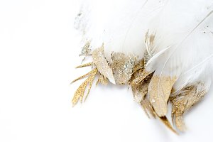 glitter feathers on white