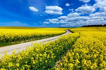 Countryside spring field landscape