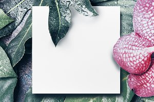 Card mock up with tropical leaves
