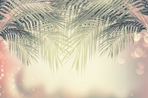 Palm tropical nature background