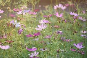 Violet tender flowers