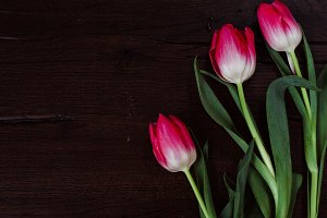 Floral Stock Photo | Styled Tulips