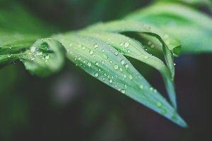 Drops on leafs.