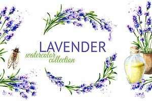 LAVENDER. Watercolor collection