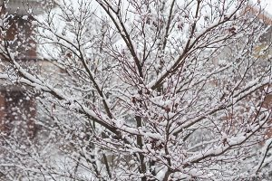 Snow on a tree