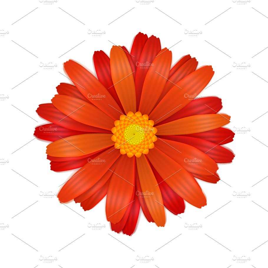 Bright Colourful Red Gerbera Flower Graphic Objects Creative Market