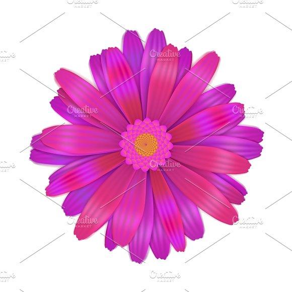 Bright purple gerbera flower graphic objects creative market mightylinksfo