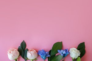 flowers on pink background, space