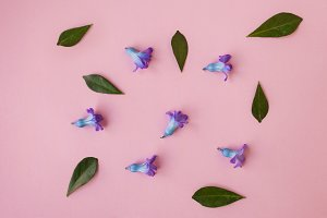 flowers on pink background, free spa