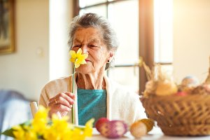 Senior woman by the window smelling yellow daffodil, Easter