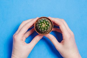 Female Hand Hold Green Cactus in Pot on Blue Pastel Color Background. Minimal Concept. Flat Lay. Top View.