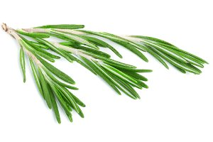 Fresh green rosemary isolated on a white background