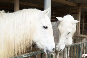 Two horses in a shelter