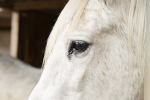 Face of a horse in a shelte