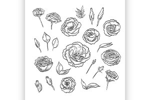 Vector hand drawn elegant lisianthus