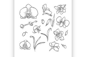 Vector hand drawn elegant orchid