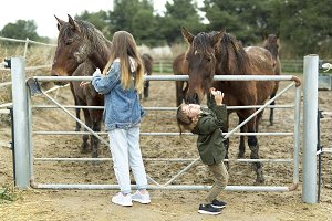 Horse giving a kiss to a 10-year-old