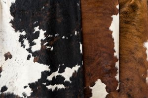 Cow skin Pattern texture