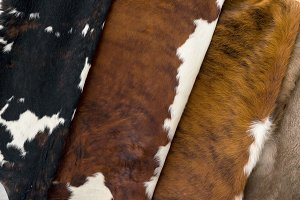 several different Cow skin, Pattern texture
