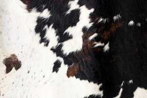 Cow skin Pattern texture black white