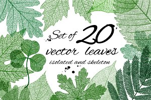 Big set of vector isolated leaves