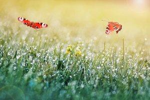 две бабочки летают над зеленым лугом