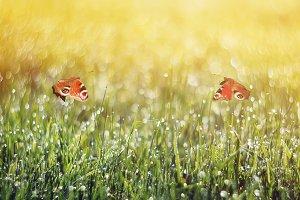 две бабочки летают над лугом
