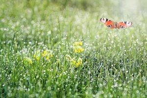 бабочка над лугом