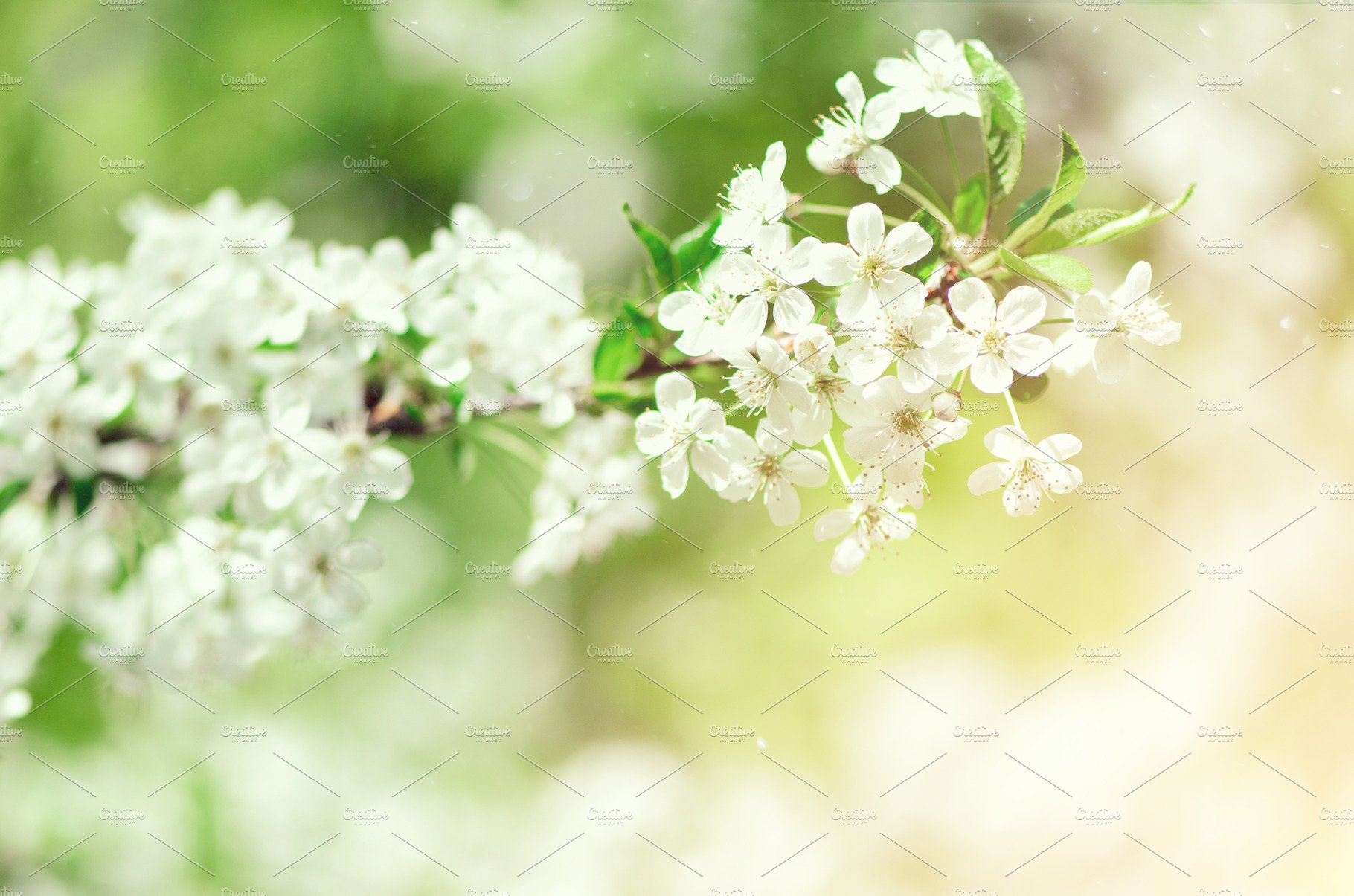 Blossom Tree Spring Nature Background Sunny Day Easter And