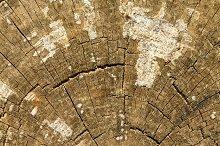 Serrated wood trunk (2)