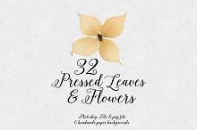 Real Pressed Leaves & Flowers 32