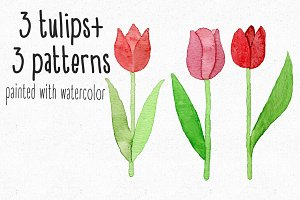 3 Watercolor tulips