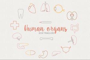 Human organs - Medical icons