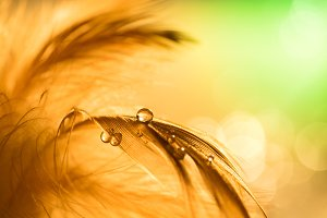 Water drops on a feather of gold color.Beautiful artistic macro., abstract natural background, artwork. Decorative background for the holiday. Selective focus.