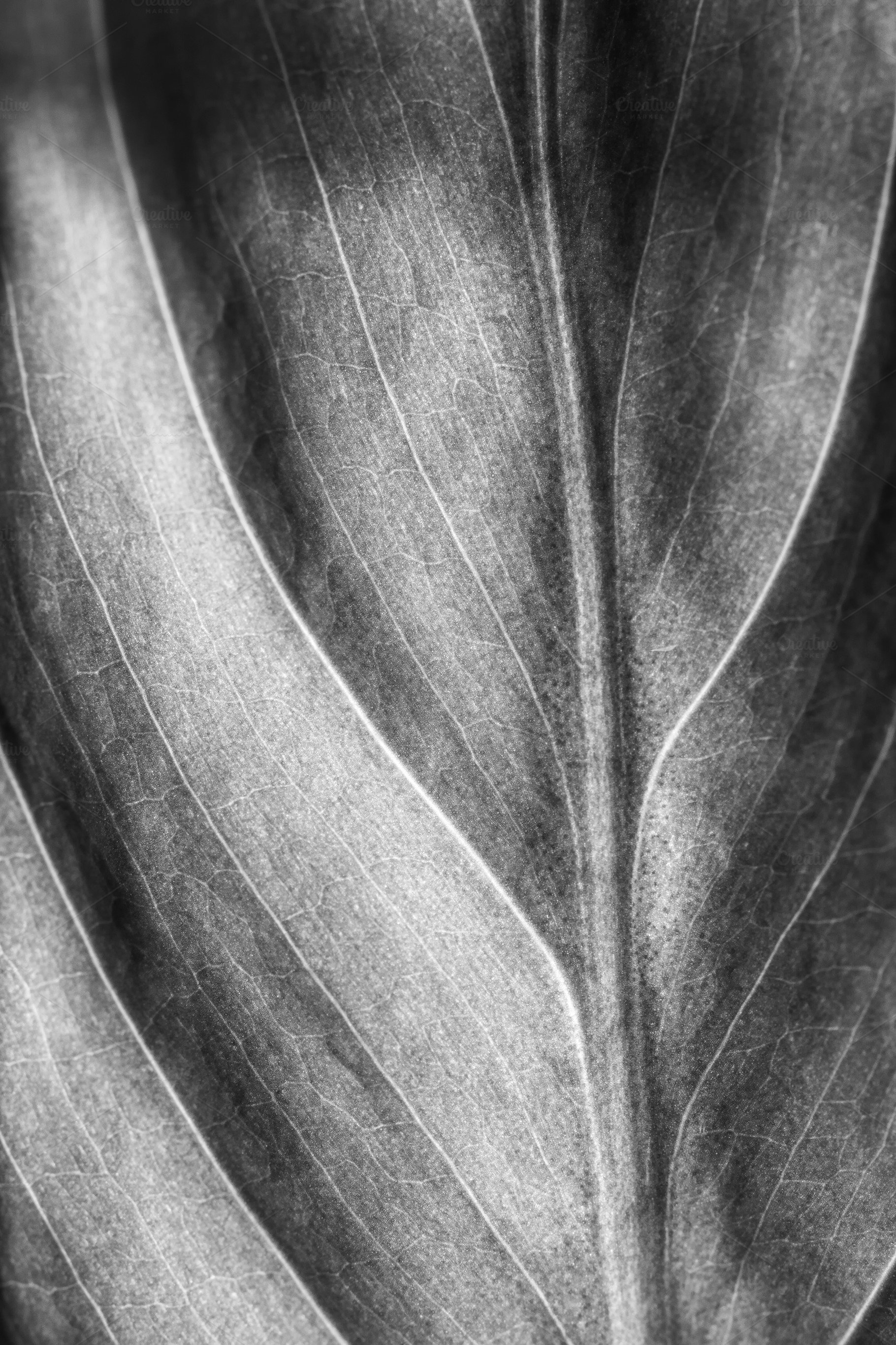 Black and white leaf texture natural background selective focus