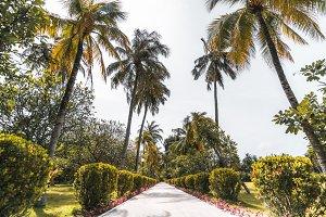 Footpath in resort, palms around