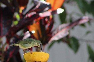 Tropical Bird, Panama