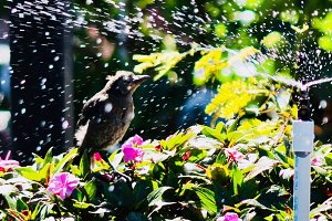 Tropical Bird Bath