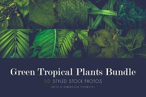 Green Tropical Plants Bundle